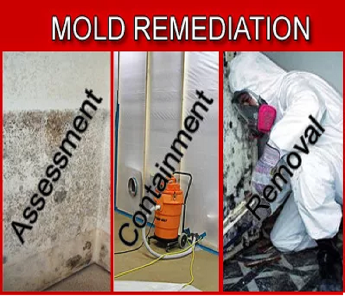 Mold Remediation Key Factors Of Mold Remediation