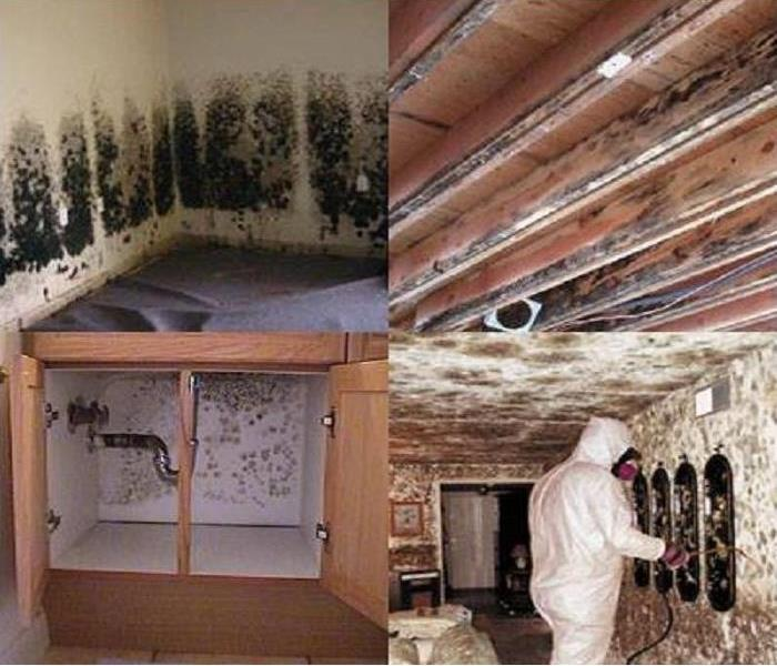 Mold Remediation Effects of Mold from Water Damage – House Cleanup & Health